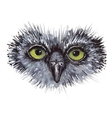 Face owl concept design Bird are isolated on white vector image vector image