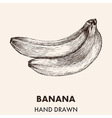 Sketch banana Hand drawn Fruit collection vector image vector image