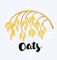 drawing of spikelet of oat on the white vector image
