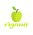 green organic apple textured vector image
