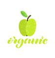 green organic apple textured vector image