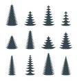 silhouette coniferous evergreen tree spruce vector image vector image