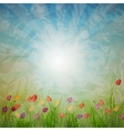 Summer Abstract Background with grass and tulips vector image vector image