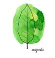leaf magnolia tree vector image vector image