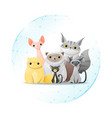 pet care concept with cats vector image vector image