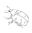 big cute freehand vector image vector image