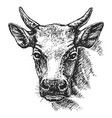 cow head sketch vector image vector image