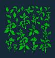 green set health food fresh herb tea vector image