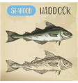 sketch of haddock fish underwater wildlife or vector image vector image