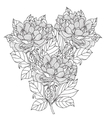 Peony bouquet Coloring book page for vector image