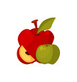 cartoon style apple fruits whole and slice vector image