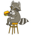 cute cartoon raccoon holding big tasty sandwich vector image vector image