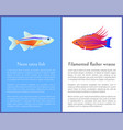 filamented flasher wrasse and neon tetra fish vector image vector image