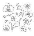 hand drawn elegant orchid vector image vector image