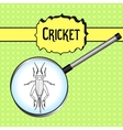 insect in magnifier cricket grig Gryllus vector image vector image