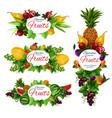 orange fruit strawberry berry tropical pineapple vector image