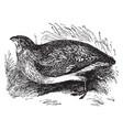 quail vintage vector image vector image