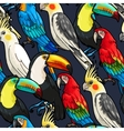 Seamless macaw and toucan vector image vector image