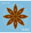 star anise flat design icon vector image vector image