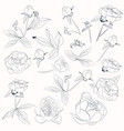 big collection peony flowers shapes vector image vector image