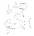 black line shark on white background shark sketch vector image vector image