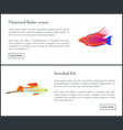 filamented flasher wrasse set vector image vector image