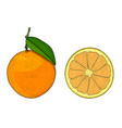 orange whole and slice hand drawn colored sketch vector image