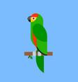 parrot green bird breed species animal nature vector image vector image