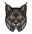 Wildcat lynx mascot isolated head vector image vector image