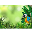 parrot on the green nature background vector image