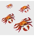 Red crab isolated vector image vector image