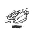 sliced cacao fruit and beans sketch cocoa pod vector image vector image