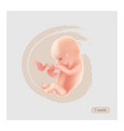 fetus sign fetal icon ten week embryo pregnancy vector image