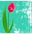 card with red tulip on textured background vector image