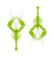 langoustine logo green river lobster crayfish vector image vector image