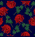 red chrysanthemum flower on navy blue background vector image vector image