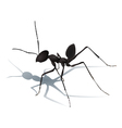 Ant with shadow isolated vector image vector image