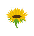 blossoming sunflower icon flat style vector image vector image