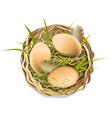 eggs in nest vector image vector image