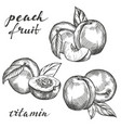 fruit peach set hand drawn vector image vector image