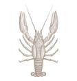lobster hand drawn sketch vector image vector image