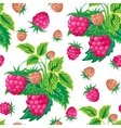 Pattern of raspberry hand painted Fruit seamless vector image