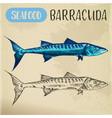 sketch ray-finned barracuda sphyraena vector image vector image
