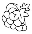 vineyard grape icon outline style vector image