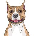 american staffordshire terrier b