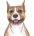 american staffordshire terrier b