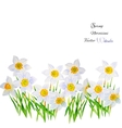 Background with Narcissuses vector image vector image