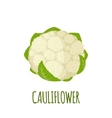Cauliflower icon in flat style on white background vector image vector image