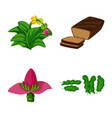 design tropical and ripe sign vector image