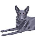 german shepherd vector image vector image